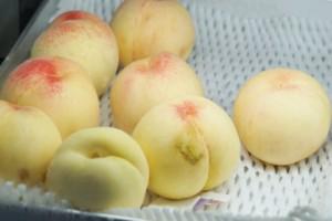 カフェフルーツトピア 桃